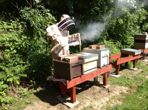 Chris tending to his Kentish bees